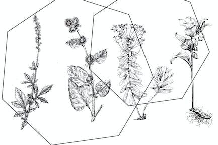 Vintage botanical ink set