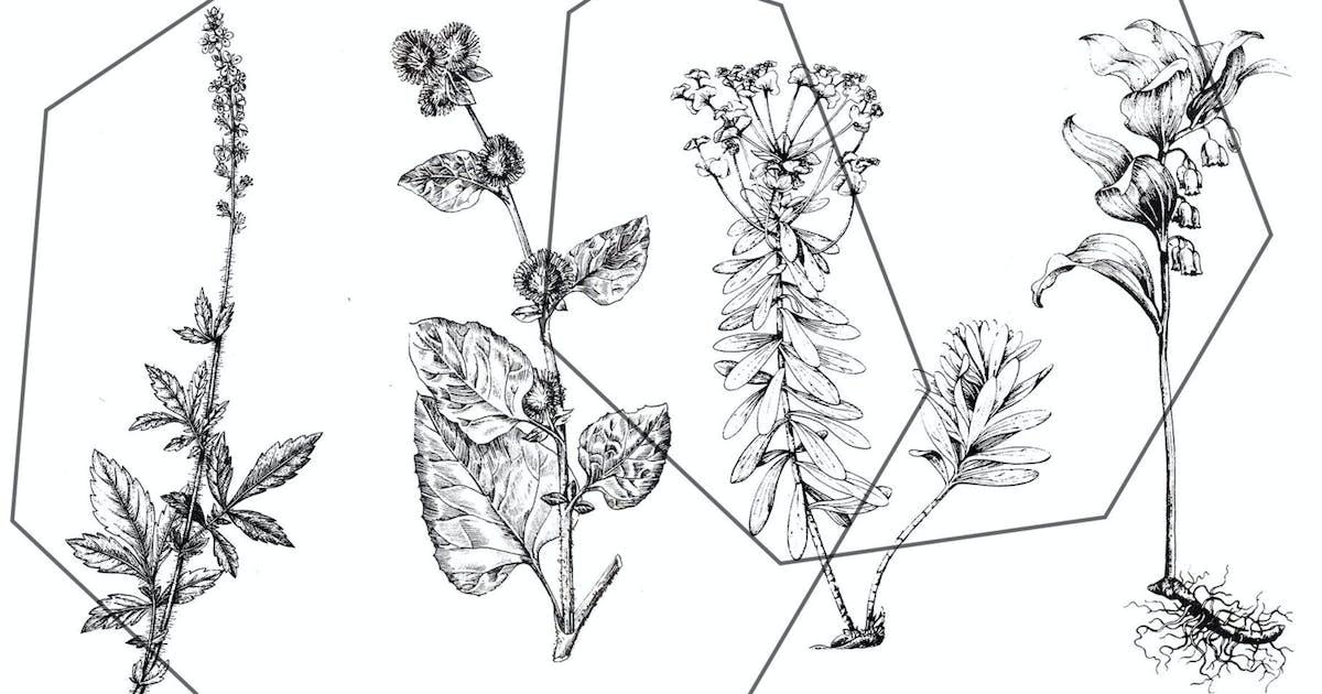 Download Vintage botanical ink set by kaleriia