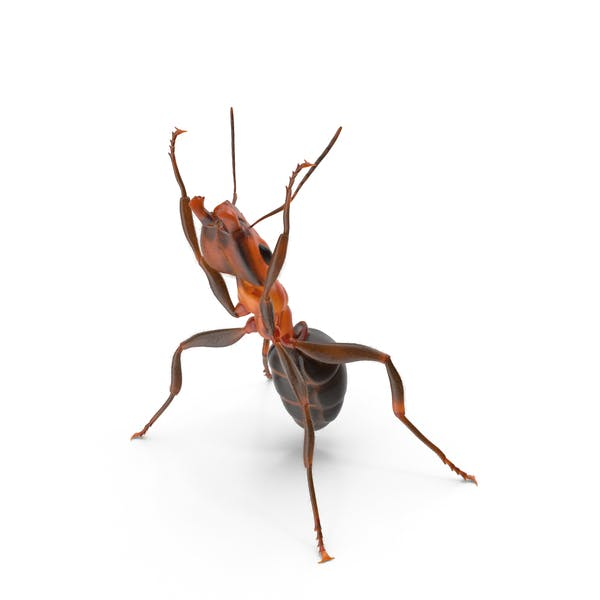 Cover Image for Ant Holding Pose