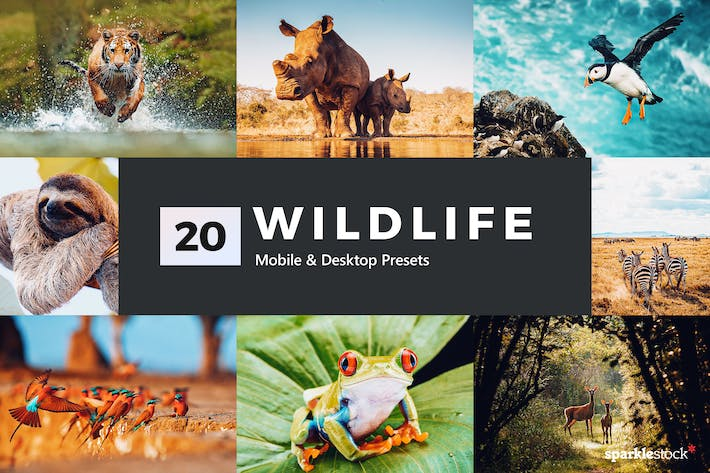 Thumbnail for 20 Wildlife Lightroom Presets and LUTs