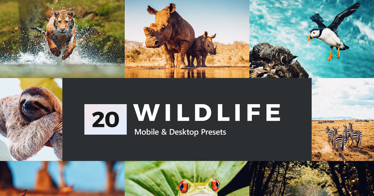Download 20 Wildlife Lightroom Presets and LUTs by sparklestock