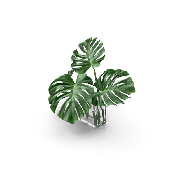 Thumbnail for Monstera Leaves