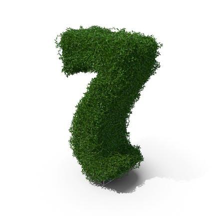 Buchsbaum Nummer 7