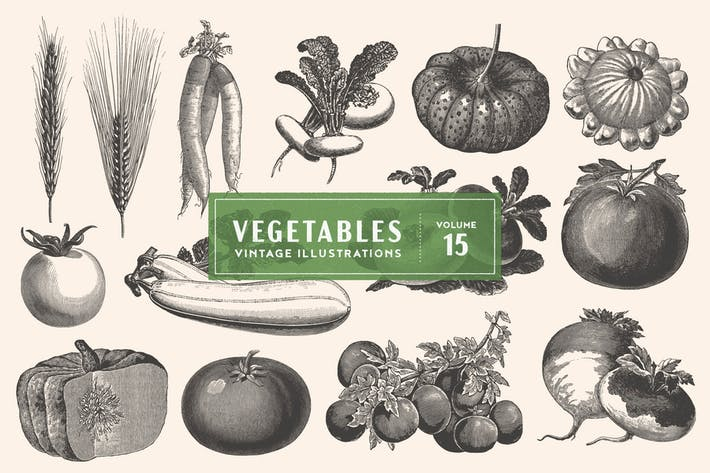Cover Image For Vintage Vegetable Illustrations Vol. 15