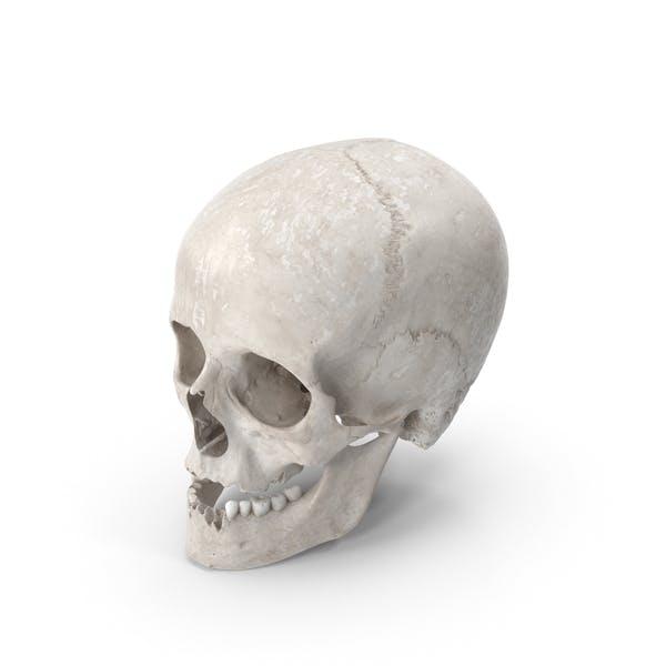 Человеческий женский череп с челюстью поврежден белый