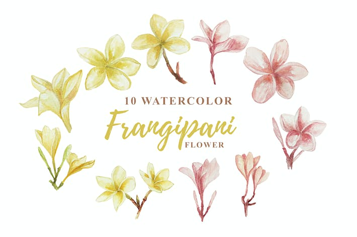 Thumbnail for 10 Watercolor Frangipani Illustration Graphics