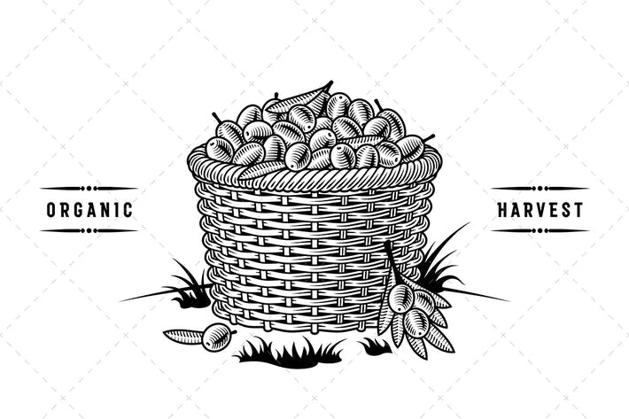 Thumbnail for Retro Basket Of Olives Black And White