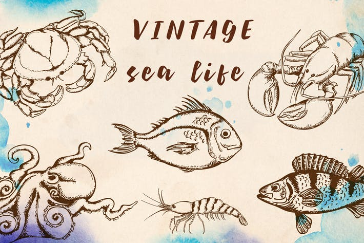 Thumbnail for Vintage Marine Design Kit