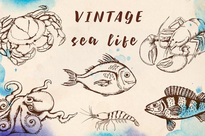 Thumbnail for Vintage Marine Design Kit