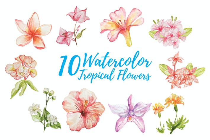 10 Watercolor Tropical Flower Illustration