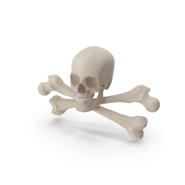 Thumbnail for Skull and Cross Bones