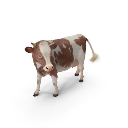 Красная и белая корова с мехом