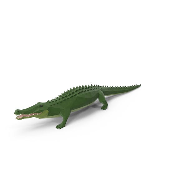 Low Poly Alligator