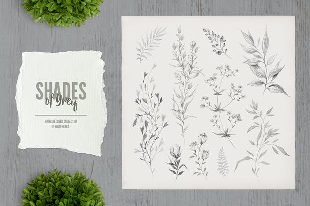 Shades of Grey. Collection of wild herbs // 1