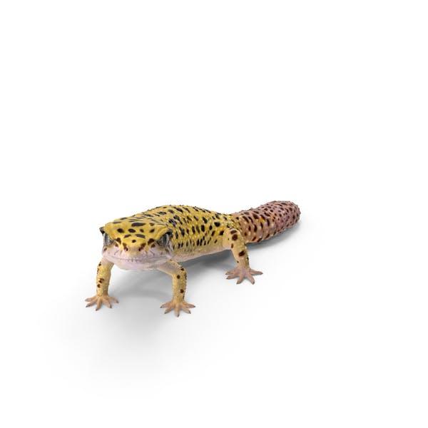 Леопард Гекко