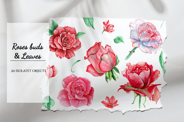 Watercolor roses buds