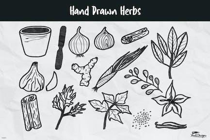 Herbes dessinées à la main