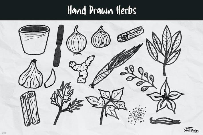 Thumbnail for Hand Drawn Herbs