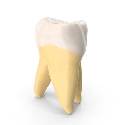 Tercer molar mandíbula superior derecha limpia