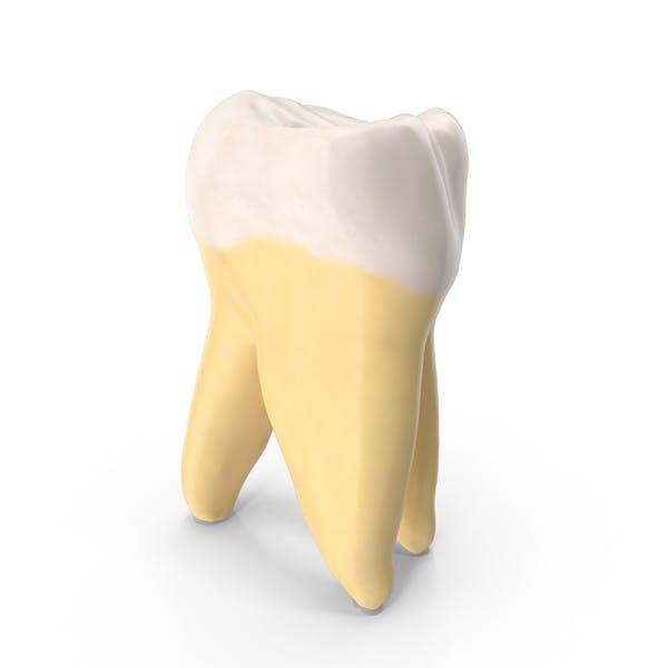 Thumbnail for Tercer molar mandíbula superior derecha limpia