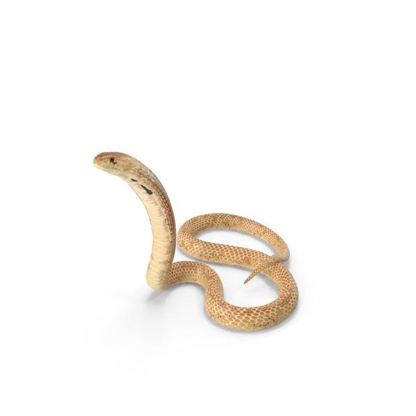 Cobra Light Skin Alert Pose