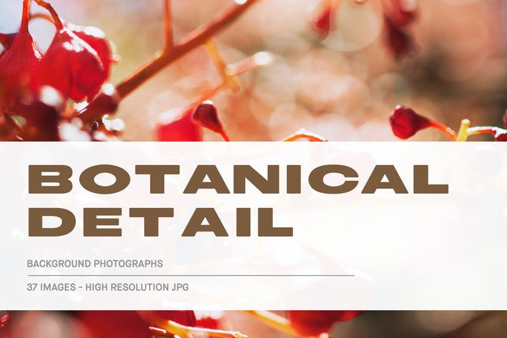 Thumbnail for Botanical Detail - Background Photographs