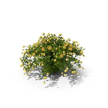 Gelbe Rose Busch