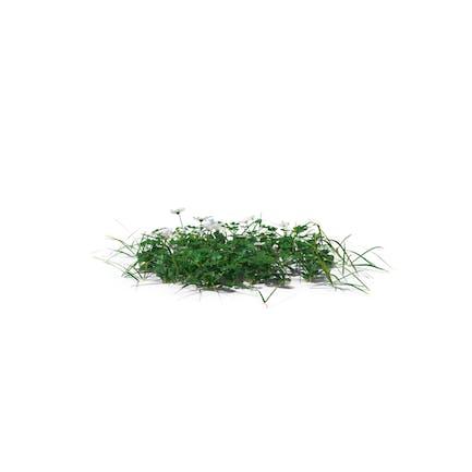 Simple Grass Moderado