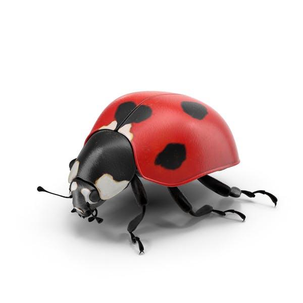 Cover Image for Ladybug