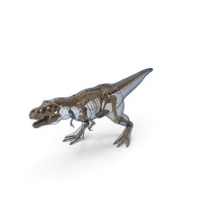 Tyrannosaurus Rex - Fósil esqueleto con piel