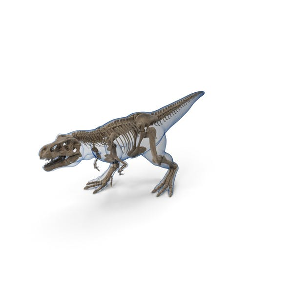 Tyrannosaurus Rex Skeleton Fossil with Skin Walking Pose