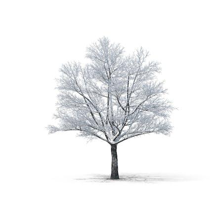 Kahler Baum im Schnee bedeckt