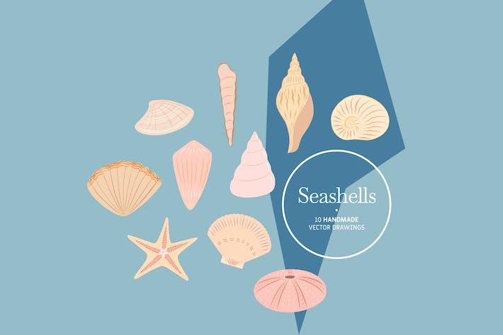 Thumbnail for Seashells - Handmade Vector Drawings