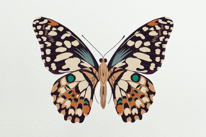 Thumbnail for Illustration - Butterfly