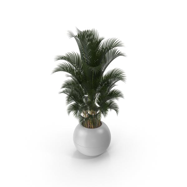 Cover Image for Potted Palm Plant