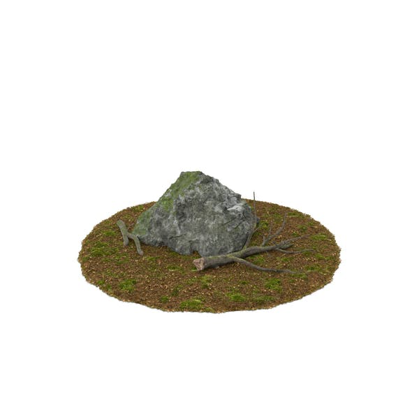 Boulder with Tree Branches