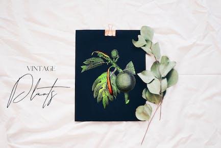 Retro grüne Pflanze - Botanik Set