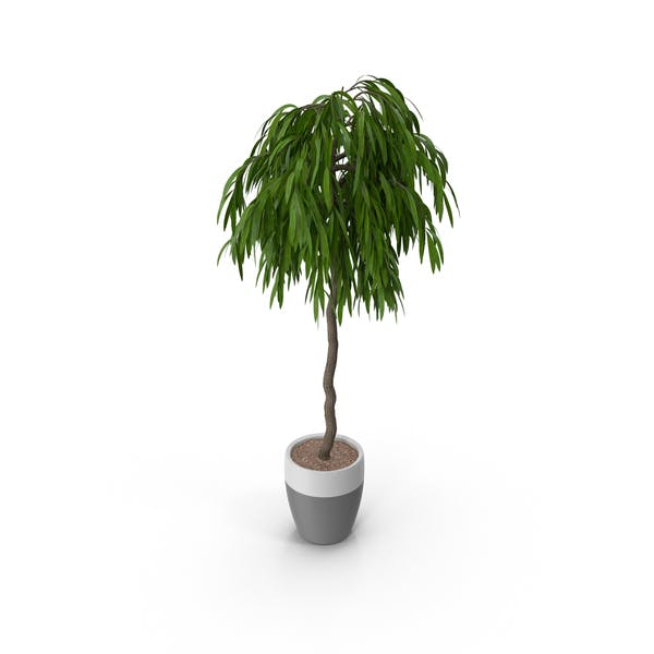 Thumbnail for Potted Plant