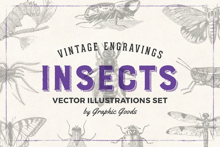 Cover Image For Insects - Vintage Engraving Illustration Set