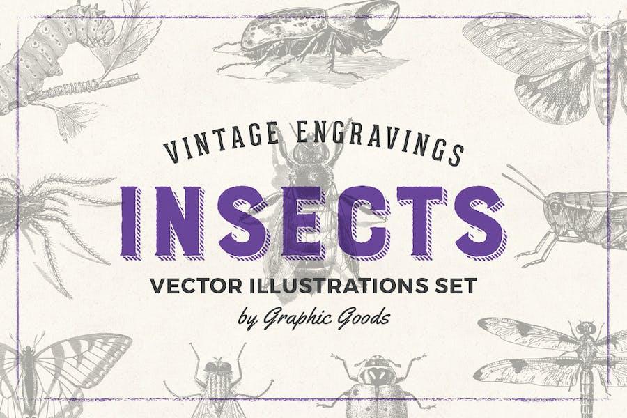 Insects - Vintage Engraving Illustration Set