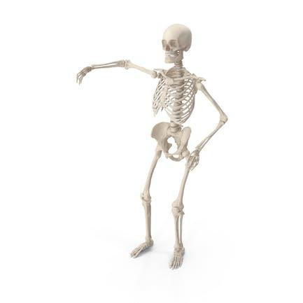 Skeleton Arm Around Shoulder