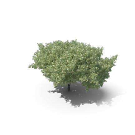 Realistischer Baum