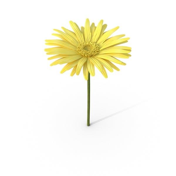 Thumbnail for Yellow Daisy