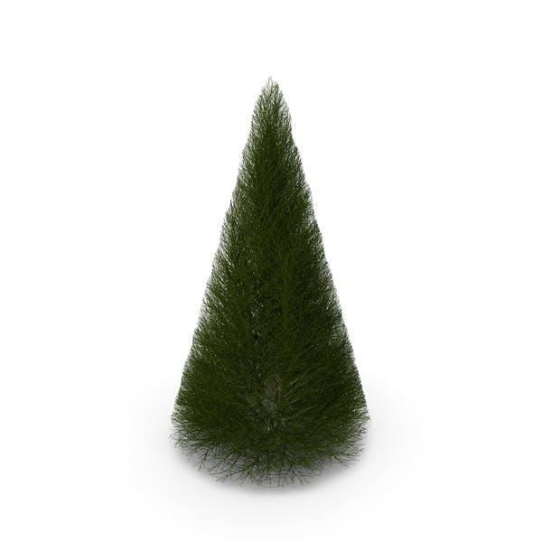 Pyramidal Bare Shrub