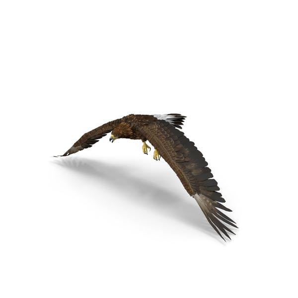 Golden Eagle Flapping