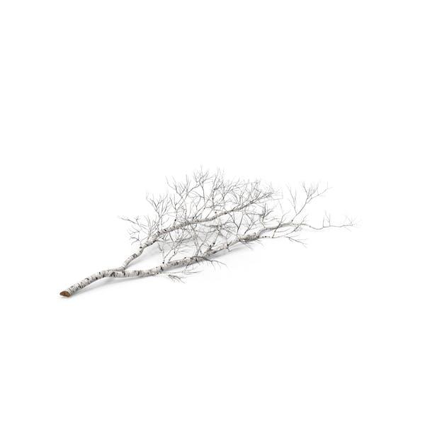 Thumbnail for Fallen Birch Tree