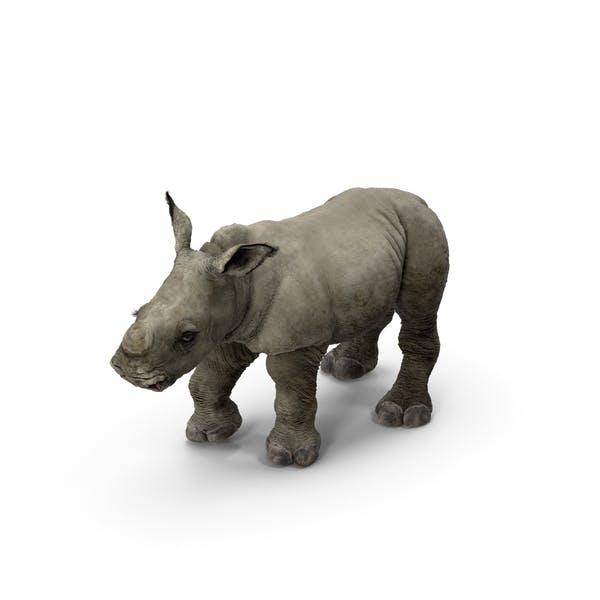 Rhino Baby Standing Pose Fur