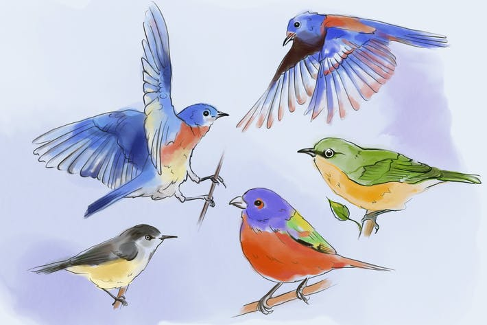 Thumbnail for Birds In Watercolor