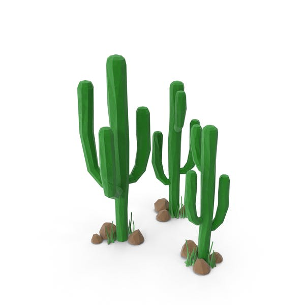 Cactus Group with Rocks