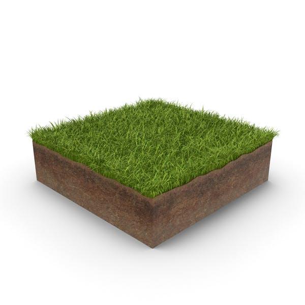 Thumbnail for Sección transversal de hierba